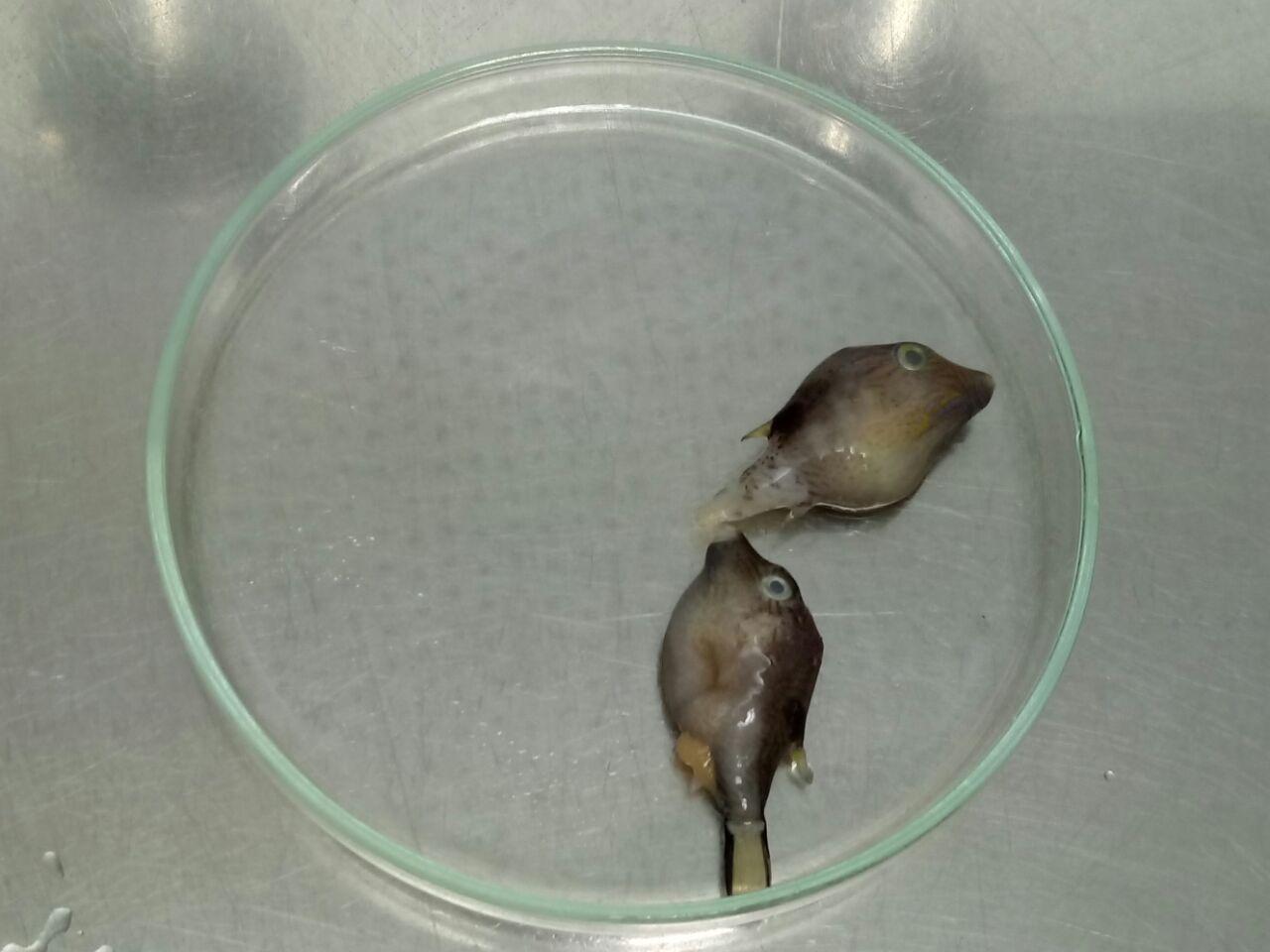 peces-muertos1.jpg